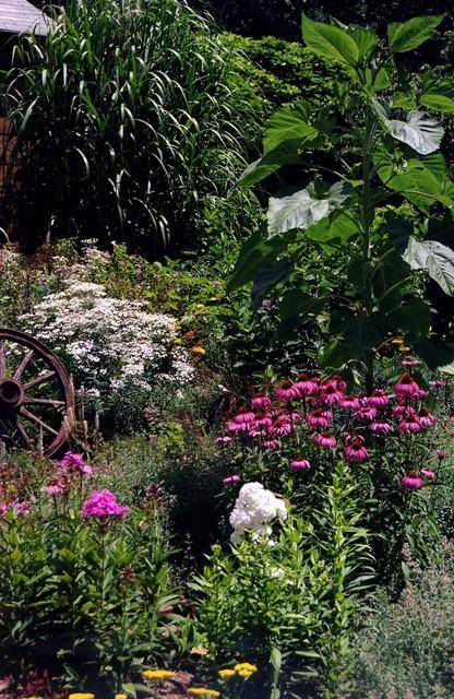 Sunny perennial garden modern dc metro by magee design for Sunny landscape designs