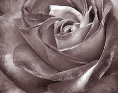 Rose In Black And White by Ben and Raisa Gertsberg canvas art, art print, giclee contemporary-artwork