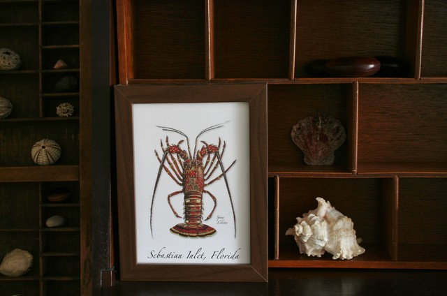 spiny lobster and seashells