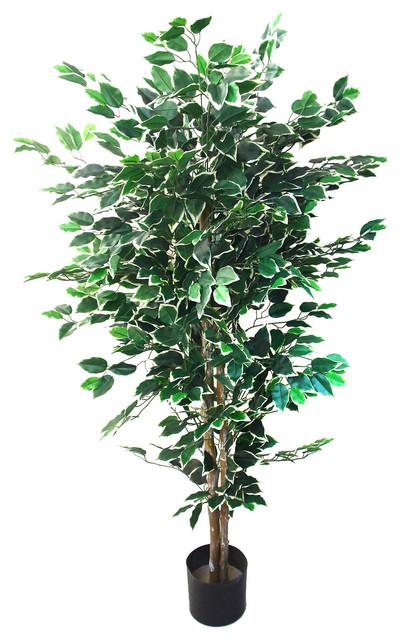 Romano 5 Foot Indoor Outdoor Ficus Tree Contemporary