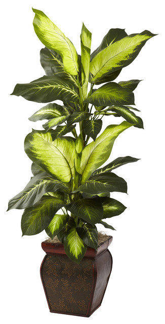 nearly 45 inch golden dieffenbachia decorative plant contemporary plants by