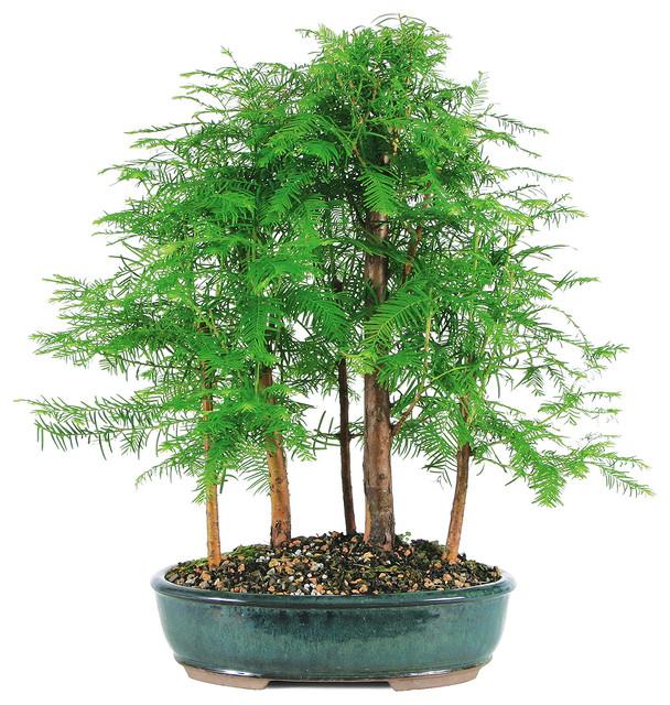 asian-plants.jpg