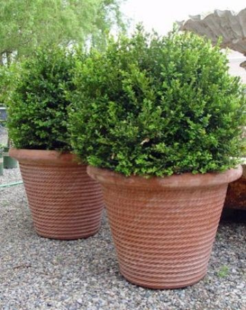 French Basque Terracotta Rope Pots traditional outdoor planters