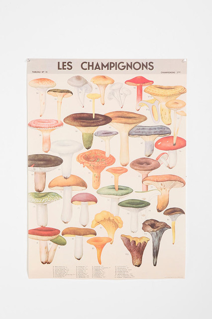 Mushroom Specimen Poster eclectic-prints-and-posters