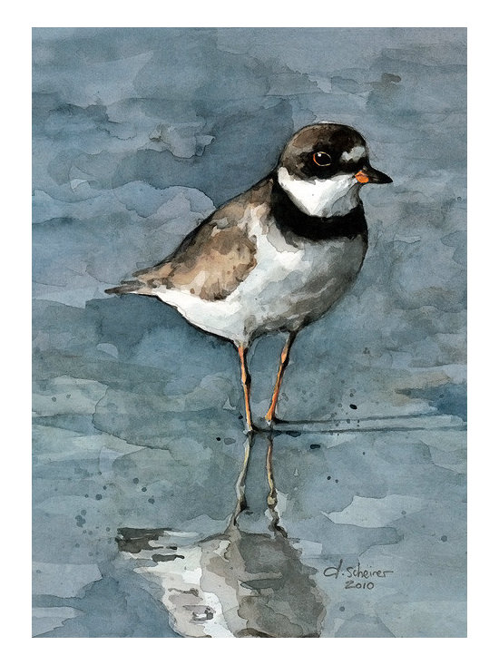 Plover Watercolor Print - 5x7 matted print by david scheirer
