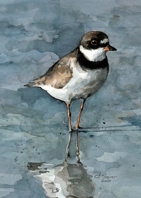 Plover Watercolor Print traditional-prints-and-posters