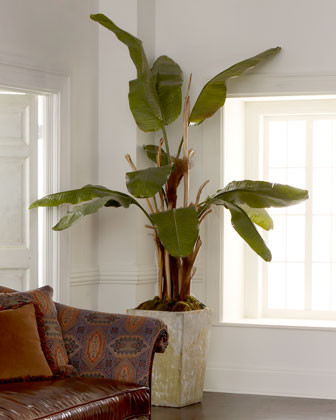 John-Richard Collection Natural Banana Tree traditional plants