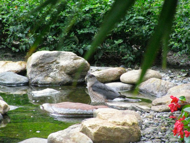 Landscape Design Pondless Water Feature contemporary-outdoor-fountains-and-ponds