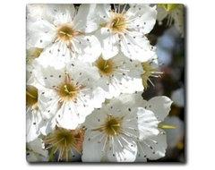 Patricia Sanders Flowers - Flowering Tree in Spring Flowers Flower Photography F traditional-tile
