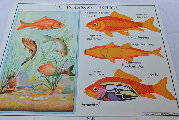 Mid Century French School Poster by For The Love Of France eclectic-kids-decor