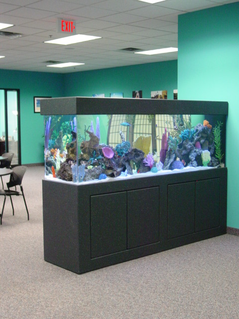 Free standing aquariums minneapolis by premier for Home decor of 9671 inc