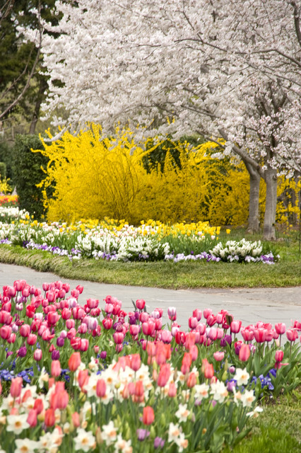 Dallas Blooms: March 3-April 8, 2012