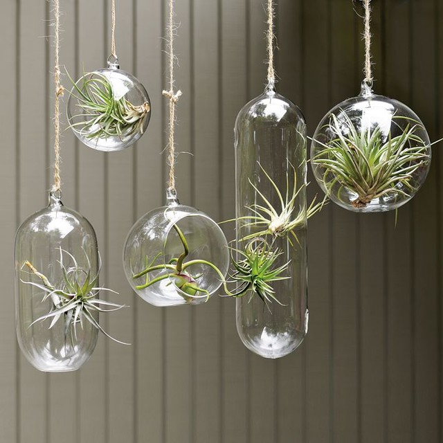 Shane Powers Hanging Glass Bubble Collection contemporary indoor pots and planters