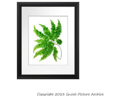 Antique Fern Botanical Print No. 5 contemporary