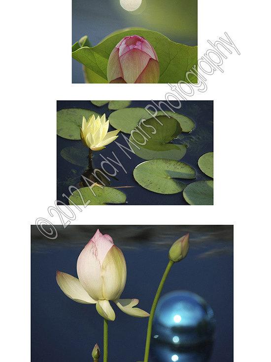 Three Photo Flower Collage - 3 Photo flower collage - Tryptics © Andy Mars Photography