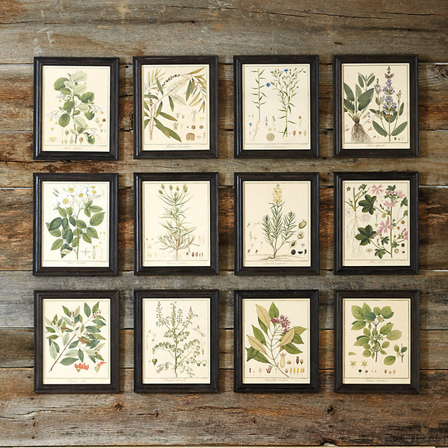 heines botanical framed art traditional prints and posters by ballard designs. Black Bedroom Furniture Sets. Home Design Ideas