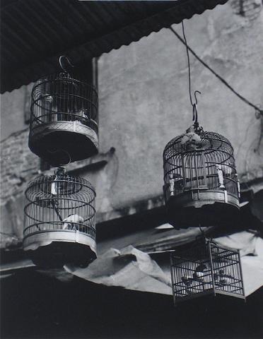 Hong Kong Photograph by Roz Joseph modern-artwork