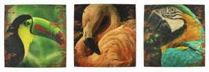 Set of 3 Tropical Bird Printed Canvas Wall Hangings tropical-artwork