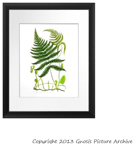 Antique Fern Botanical Print No. 9 Green fern leaves wall hanging wall art tropical