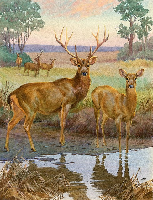Barasingha deer wallpaper wall mural self adhesive for Deer mural wallpaper