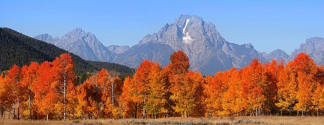 Grand Tetons Autumn Panorama Wall Mural Self Adhesive