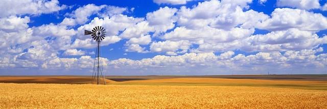 Windmill Wheat Field Panoramic Fabric Wall Mural