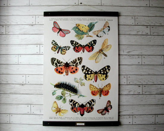 Large Pull-Down Style Canvas School Science Botanical Chart by Gritty City Goods -