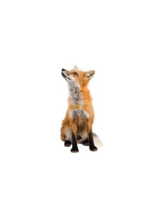 Forest Friends Fox Wall Sticker -