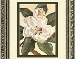 Afternoon Magnolia Framed Print by Waltraud Fuchs Von Schwarzbek traditional prints and posters
