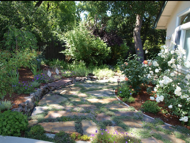 drought resistant garden and patio