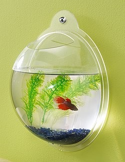 Wall Mount Fish Bowl Aquarium Tank eclectic-fish-supplies