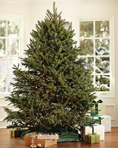 Fresh Blue Ridge Mountain Christmas Tree Traditional