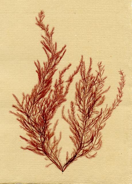 Marine Botanicals contemporary-artwork