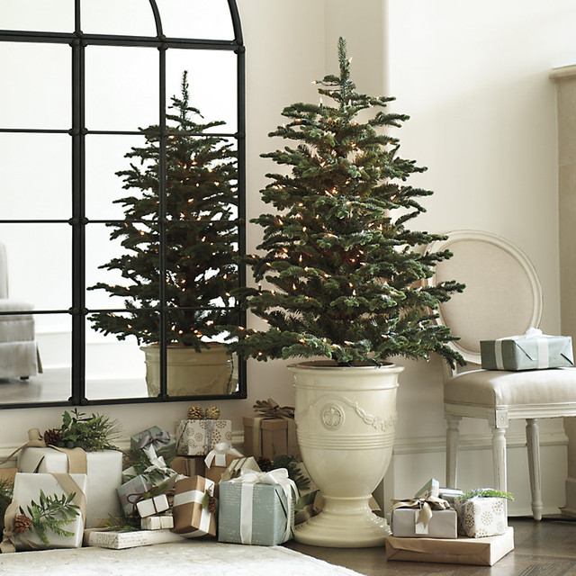 noble fir tree traditional christmas trees by