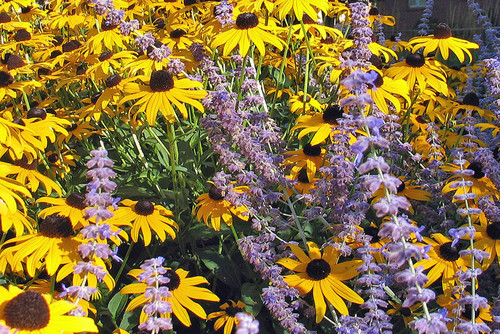 What Flowers To Plant In The Spring In Colorado Lifescape Colorado