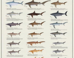 World's Most Dangerous Sharks Poster modern-prints-and-posters