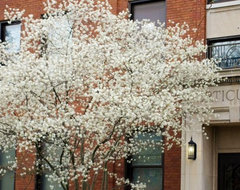 Plant of the Week — Serviceberry traditional-landscape