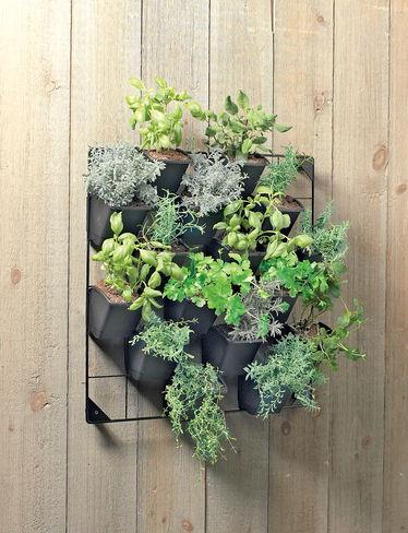 Vertical Wall Garden contemporary-outdoor-planters