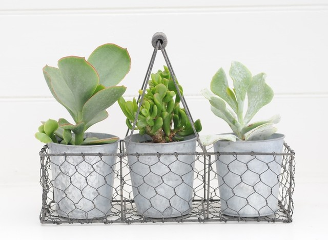Tall succulent trio plant contemporary plants by for Indoor decorative live plants
