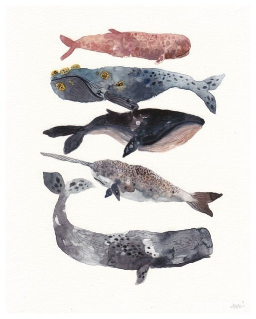 Five Whales Stacked - Archival Print tropical-artwork