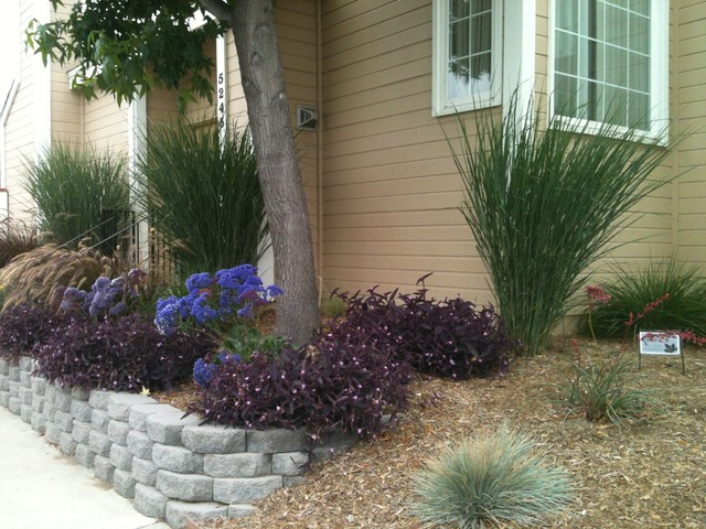 Naples ca low water low maintenance with space between for Ideas for low water landscapes