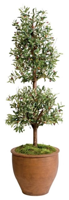 olive floor topiary traditional plants