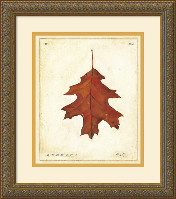 Wall Art Of Leaves : Oak leaf framed print by meg page traditional prints