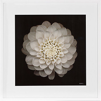 Dahlia 22 - Neil Seth Levine modern artwork