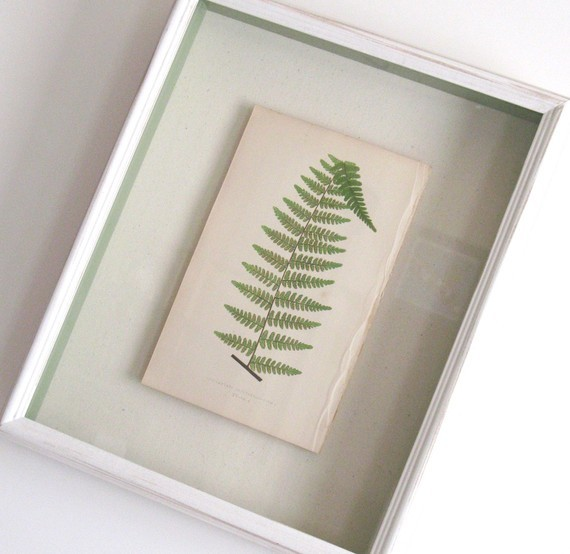 Shadow Box–Framed Original Antique Fern Print by Kari Style contemporary artwork