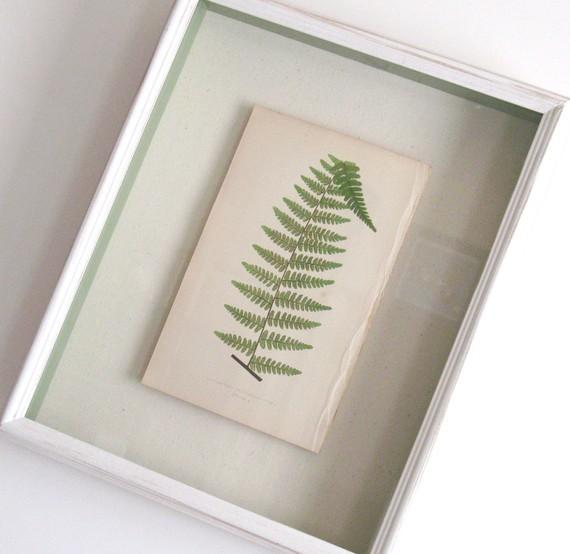 Shadow Box–Framed Original Antique Fern Print by Kari Style contemporary-artwork
