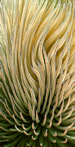 Desert Green by Ben and Raisa Gertsberg - canvas art, art print, giclee contemporary-artwork