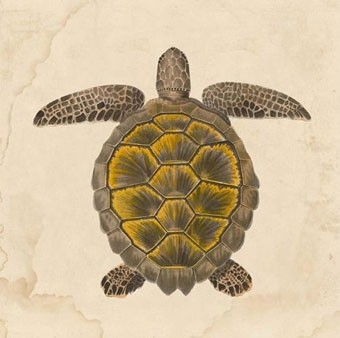Nile Voyage Turtle 1 - Natural Curiosities tropical artwork