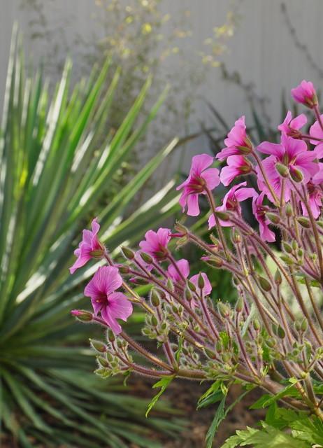Bold Plantings tropical-landscape