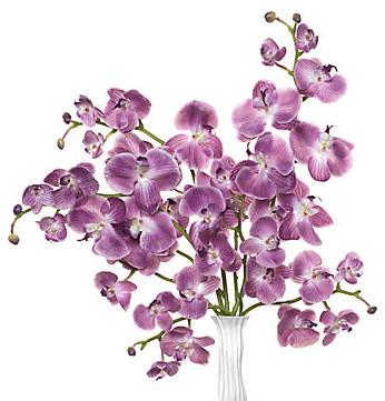 Phalaenopsis Orchid - Aubergine Set of 3 modern-plants